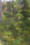 Stor spindelrengöringsduk Arkivfoto