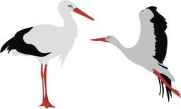 stor stork Arkivfoto