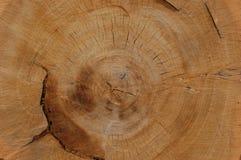 stor stump Royaltyfria Bilder