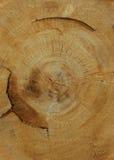 Stor stump Arkivfoton
