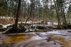 Stor stupad stam av granen, gran i träna, bergflod, ström, liten vik med forsar i den sena hösten, tidig vinter Fotografering för Bildbyråer