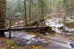 Stor stupad stam av granen, gran i träna, bergflod, ström, liten vik med forsar i den sena hösten, tidig vinter Arkivfoton