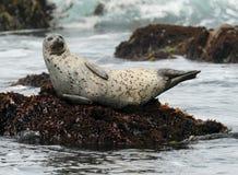 stor sur för skyddsremsa för Kalifornien hamnrock Fotografering för Bildbyråer