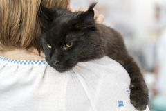 Stor svart katt på skuldran Royaltyfria Bilder