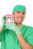 stor tandläkaremodellreproduktion som visar teet Arkivbild