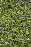 Stor textur för bakgrund för grönt gräs för blad endast royaltyfri foto