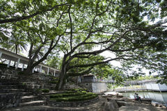 Stor träd och himmel Royaltyfria Bilder