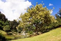 Stor träd och springbrunn i trädgården Royaltyfri Foto