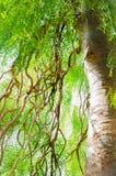 Stor trädfilial Arkivbilder