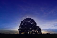 Stor trädisolat i höst på fältet, abstrakt färgstil Royaltyfri Fotografi