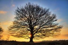Stor trädsoluppgång arkivbild
