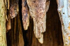 Stor trädstam med tomhet inom Bakgrund arkivbilder