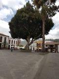 Stor tree Arkivfoto