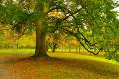 Stor tree Fotografering för Bildbyråer