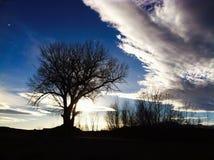 Stor tree Royaltyfria Foton