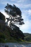 Stor tree Royaltyfri Fotografi