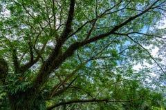 Stor tree Royaltyfri Bild