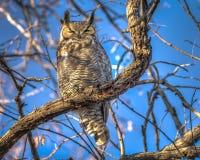 stor tree för horned owl Arkivfoton