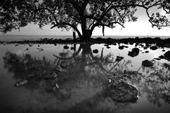 Stor tree i silhouette Arkivbild