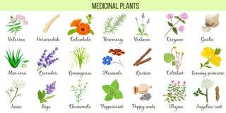 Stor uppsättning av medicinalväxter Valeriana aloe vera, lavendel, pepparmint, angelika rotar, kamomillen, verbena, anis royaltyfri illustrationer