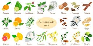 Stor uppsättning av nödvändiga oljeväxter Vanilj, kanel, jasmin, teträd, bergamot, sandelträn, patchouli etc. Royaltyfri Foto