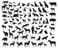 Stor uppsättning för vektor av olika lösa och tämjde djur på vit bakgrund Arkivbild