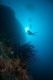 Stor vägg med olika koraller i Gorontalo, Indonesien Royaltyfria Foton