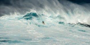 Stor våg på käkar Maui Hawaii Arkivfoto