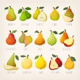 Stor variation av päron med namn Isolerade vektorbilder royaltyfri illustrationer
