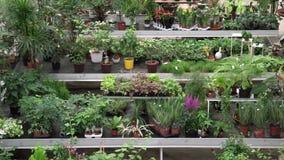 Stor variation av växter och blommor inom av det botaniska gröna huset Härlig orangeri mycket av dekorativa, sällsynta exotiska v lager videofilmer