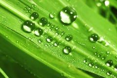 Stor vattendroppe Royaltyfria Bilder