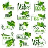 Stor vektorsamling av klottereco, bio, natur och organiskt stock illustrationer