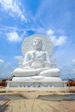 Stor vit buddha staty Royaltyfri Fotografi