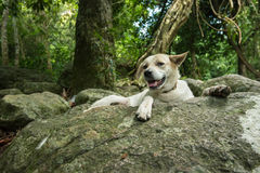 Stor vit hund på vagga i regnskog Royaltyfria Foton