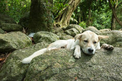 Stor vit hund på vagga i regnskog royaltyfri bild