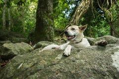 Stor vit hund på vagga i regnskog royaltyfri foto