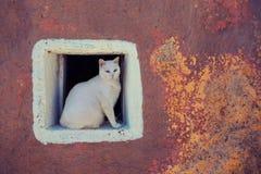 Stor vit katt som sitter på ett fönster i en vit fyrkant på bakgrunden av en gammal vägg royaltyfri foto