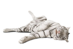 Stor vit tiger Royaltyfria Foton