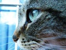 Stora ögon för katt Royaltyfria Bilder