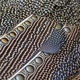 Stora argus fjädrar Arkivfoton