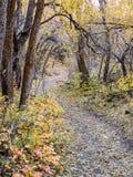 Stora Autumn Fall skogsikter som fotvandrar till och med träd på Rose Canyon Yellow Fork och, vaggar slingan i Oquirrh berg på Wa royaltyfri foto