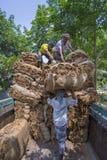 Stora belopp av torra tobak som förutom laddar i en bärande lastbil i Dhaka, manikganj, Bangladesh Arkivbilder