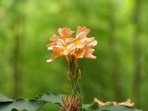 stora blommor Royaltyfri Foto