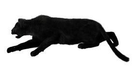 Stora Cat Black Panther Arkivbild