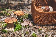 Stora champinjoner och vide- korg i skoggläntan Arkivfoto