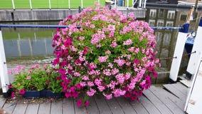 Stora dekorativa blommor på flodbanken i Amsterdam Royaltyfri Foto