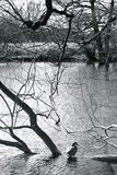 Stora Driffield östliga Yorkshire England Arkivfoton