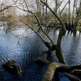 Stora Driffield östliga Yorkshire England Arkivbilder