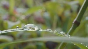 Stora droppar av dagg på ett gräs Stora vattendroppar på ett gräs Arkivbilder