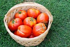 Stora ekologiska tomater i en korg Royaltyfri Foto